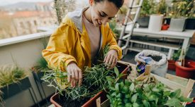 Photo of a young woman rearranging plants in her rooftop garden